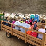 Hay Ride and Maze
