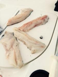 Quillback filets